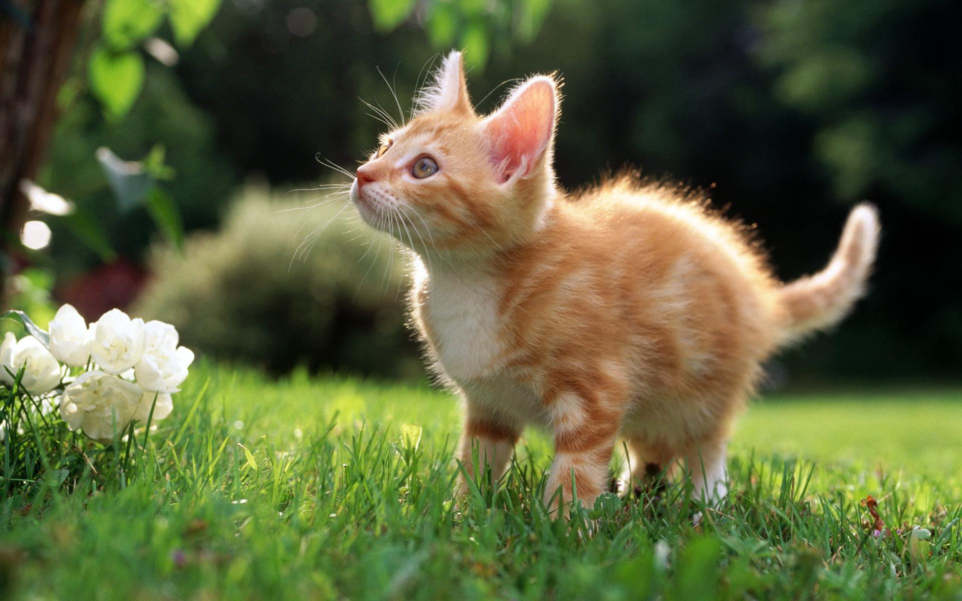 Кошки кошки фото   zooclubru